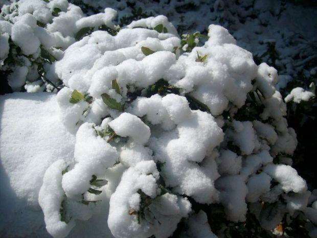 March snow2