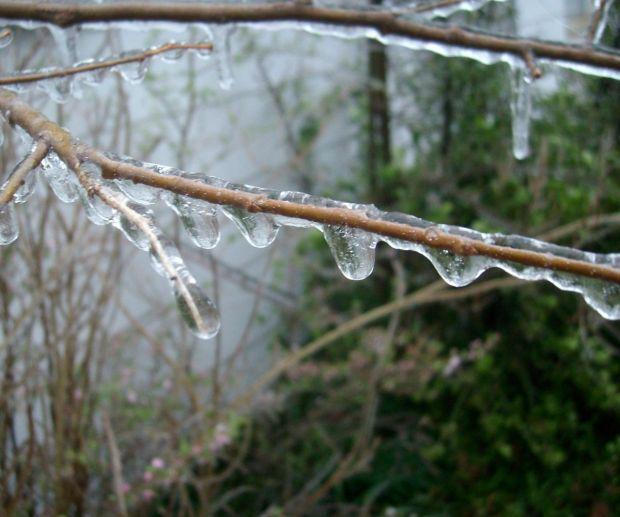ice storm3